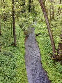 Am Eingang zum Vogelsangbachtal treffen wir auf den Rinderbach