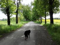 Auf der Allee, die zu Schloss Linnep führt