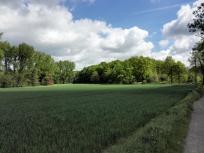Kurz vor dem Waldfriedhof Ratingen-Lintorf