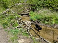 Hier haben Kinder einen kleinen Damm gebaut