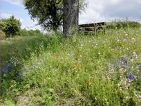 Schöne Wildblumen zwischen Rossen und Oberkessbach