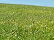 Wilde Blumenwiese im Wind
