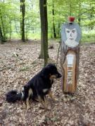 Im Wald ist der ursprüngliche Limes-Verlauf markiert