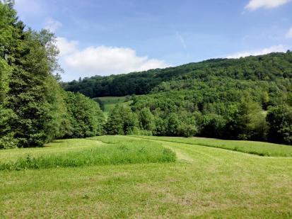 Ausblick auf den Wald kurz vor dem Mühlengrund bei Schuppach