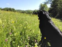 Wie schön die Wildblumen blühen