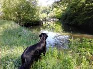 Doxi lässt kein Fließgewässer aus