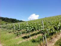 Ein sonniger Tag über den Weinbergen rund um Beilstein