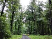 Nach dem Regen strahlt der Wald in sattem Grün