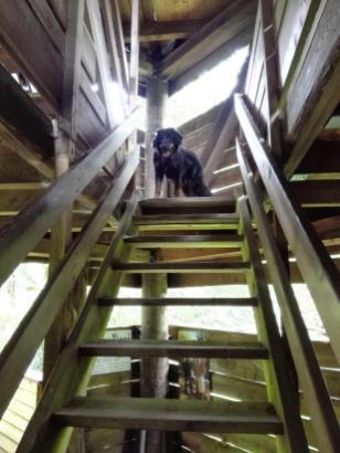 Doxi läuft die Treppen voraus