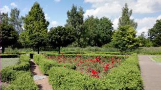 Rosen im Schlosspark
