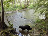 Doxi prüft die Wasserqualität des Eltzbachs