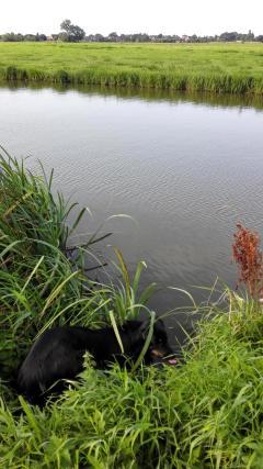 Doxi testet die Wasserqualität des Kanals