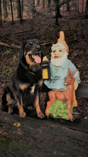 Doxi und der Gartenzwerg, der eigentlich eher ein Waldzwerg ist
