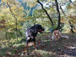 Bellis und Doxi auf dem Weg oberhalb des Belgenbachtales