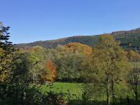 Kurz vor dem Abstieg ins Belgenbachtal