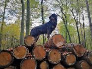Doxi hat einen Holzstapel erklommen und schaut sich um