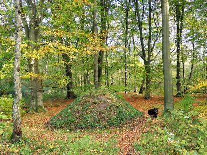 Auffallend viele kleine Hügel im Schlosswald