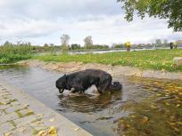 Doxi testet die Wasserqualität an den Wasserspielen im Park