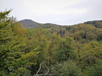 Verborgene Pfade im Siebengebirge