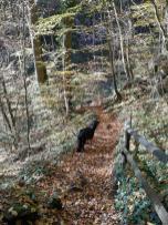 Abstieg in die Wolfsschlucht