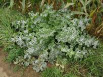 Eine eigenartig stachelige Pflanze am Feldrand