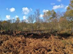 Brücke über einen Feuchtgraben