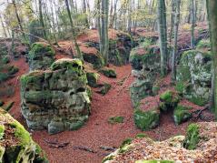 Wald oberhalb der Teufelsschlucht