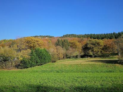 Blick zum Wald östlich der Prüm