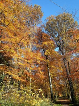 Herbstlich bunter Wald im Volkspark Katzenbusch