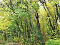 Wald am Zuweg zu Schloss Türnich