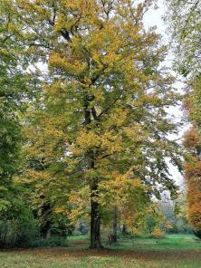 Prächtige alte Bäume im Park von Schloss Türnich