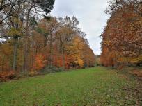 Grünstreifen im Wald