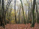 Durch Buchenwald geht es oberhalb der Wied zum Strödter Hügel