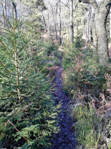 Auf schmalen Pfaden geht es durch den Wald