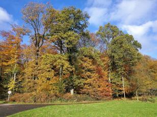 Wald in der Saarner Mark