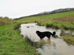 Teich im Pillebachtal