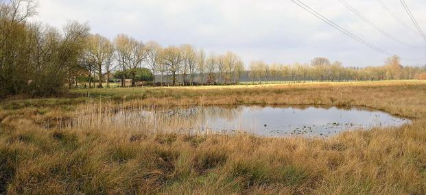 Zahlreiche Wasserflächen prägen die Gegend