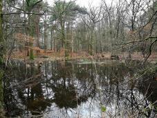 Stiller dunkler Waldsee
