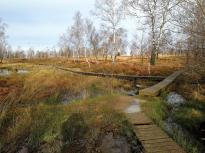 Heidelandschaft im Naturschutzgebiet Struffelt
