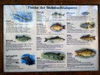 Infotafel zum Fischbestand in der Steinbachtalsperre