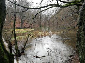 Eine der größeren Siepen im Saalbachtal