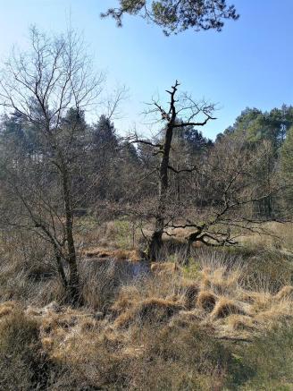 Totholz im Galgenvenn
