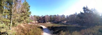 Ehemalige Sandgrube im Wald