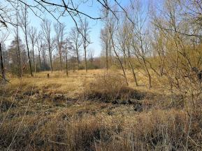 Auenlandschaft im Naturschutzgebiet
