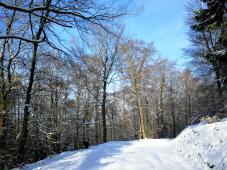 Beim Aufstieg in den Hochwald oberhalb von Virneburg