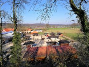 Pferde auf Gut Hochwald