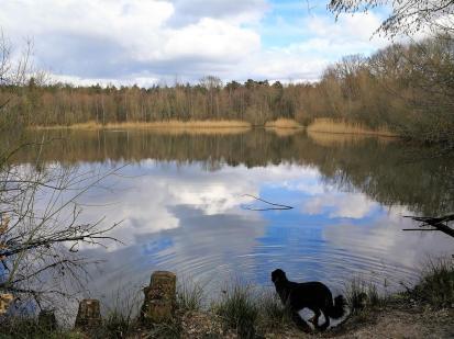 Doxi an einem der durch Kiesabbau entstandenen Seen