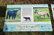 Infotafeln zur den Rindern und Wildpferden in den Auen