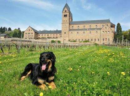 Doxi vor der Abtei St. Hildegard