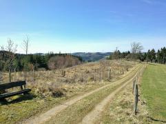 Auf den Höhen über dem Leiderbach. Hier wurde neuer Wald gepflanzt.